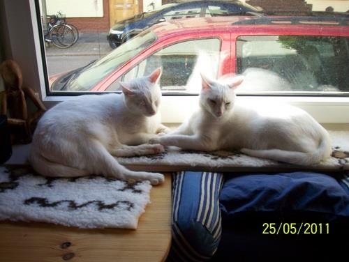 Sammy und Sly