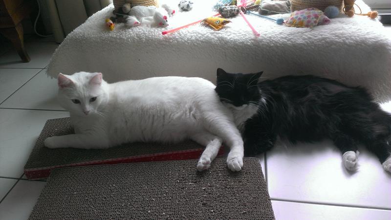 Silver & Iluna