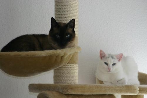 Smartie & Saphira