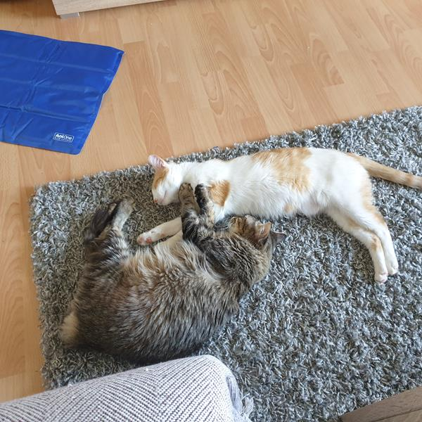 Nala & Tiara (ehem. Emi & Elsa)