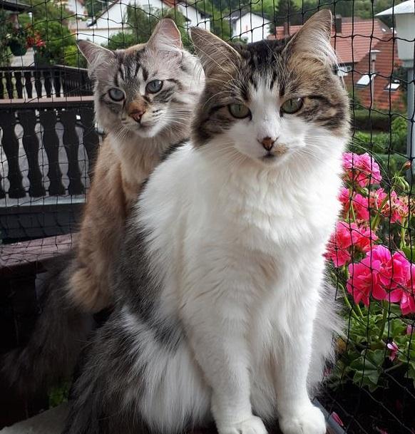 Max & Mira